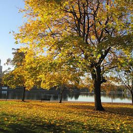 Hakaniemenranta syksyllä by Jouni Linden - City,  Street & Park  City Parks