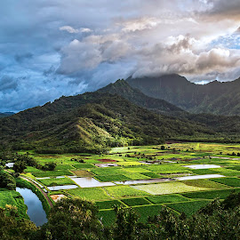 Hanalei River Valley by Jacob Padrul - Landscapes Travel ( kauai, mountains, afternoon light, afternoon, sereenity, green valley, hawaii, golden light )