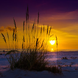 Siesta Silhouette by Scott Thomas - Nature Up Close Sand ( sand, silhouette, florida, sunset, beach, siesta key, purple, yellow, color )
