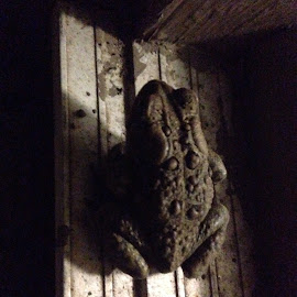 Sitting on the window ledge by Ruth Hares - Animals Amphibians ( #toad #toads #frogs #sidelighting )