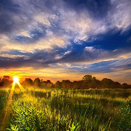 Day of Rest by Phil Koch - Landscapes Prairies, Meadows & Fields ( vertical, wisconsin, ray, phil koch, landscape, photography, sun, love, wicounties, sky, nature, tree, weather, horizons, flower, follow, clouds, park, green, twilight, horizon, scenic, shadows, wild flowers, field, red, blue, fog, sunset, meadow, landscapephotography, trees, beam, sunrise, landscapes, floral, mist )