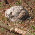 Wisconsin Fauna