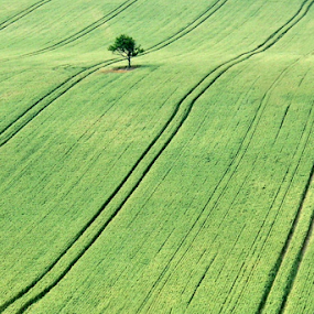 Solitaire by Dominic Jacob - Landscapes Prairies, Meadows & Fields ( field, tree, green, solitaire, alone,  )
