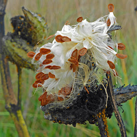 seed pods by Michele Williams - Nature Up Close Other plants