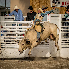 Bull Riding2 by Troy Wheatley - Sports & Fitness Rodeo/Bull Riding ( riding, rodeo, bucking, dirt, bull, cowbow )