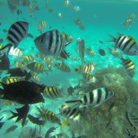 Coron, Palawan by Shaw Rivera - Landscapes Underwater ( underwater, ocean, palawan, philippines )