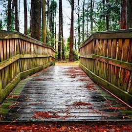 Wilmington, NC by Lou Plummer - City,  Street & Park  City Parks (  )