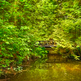 Forest pond and walkway by Kathy Dee - Landscapes Forests ( canada, lush, green, visitors, tourism, forest, vancouver, ferns, rainforest, pool, walkway, bridge, garden, pond )