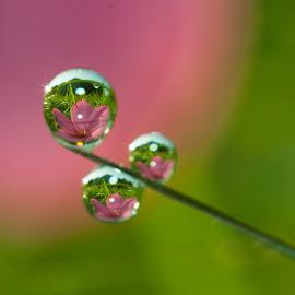 by Sofyan Ian - Nature Up Close Natural Waterdrops