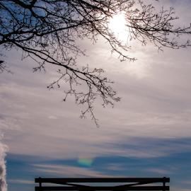 Lonely Bench by DeAndre Watkins - City,  Street & Park  Skylines ( sky, winter, tree, bench, snow, flare, sun )