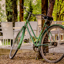 Bike by Stefan Stevanovic - Transportation Bicycles ( srbija, greens, caffeine, colors, green, green leaves, leaves, bicycle, bicycles, bike, nature, color, bikes, serbia, biker, greenery, cafe,  )