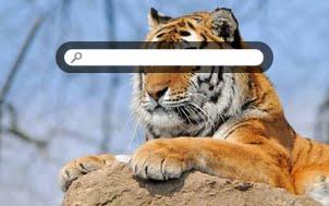 Tiger 0412 6269