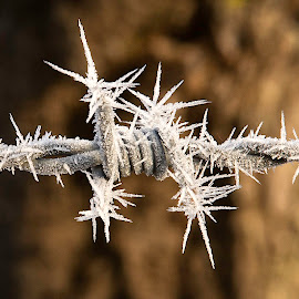 Frosty Barbed Wire by Troy Wheatley - Abstract Macro ( farm, fence, pointy, macro, cold, sharp, frost, barbed wire )