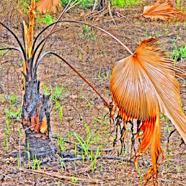 Surviving bush fire by Yusop Sulaiman - Nature Up Close Other plants