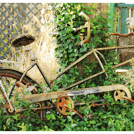 Bicycle Built For Two by Ginny Anderson - Transportation Bicycles ( ride, built for two, rusty, garden, bicycle )