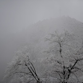 dazzlingly white by Mingrui Jiang - Landscapes Travel ( winter, mountain, snow, trees, china )