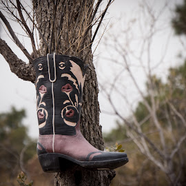 Old Cowboy Boot on tree as flower pot by Karen Martin - Artistic Objects Clothing & Accessories ( old cowboy boot tree flower pot brown black tan woods forest park )