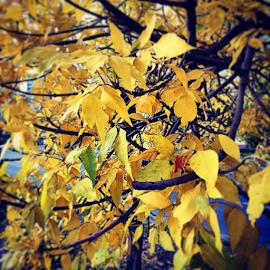 Осень by Vadim Malinovskiy - Instagram & Mobile iPhone