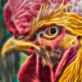 cock-a doodle-doo by Thomas Alexander - Digital Art Abstract ( nikond7100, fractaius, nik color efex pro, ohio state fair 2014, rooster, sleepingbear imagewear )