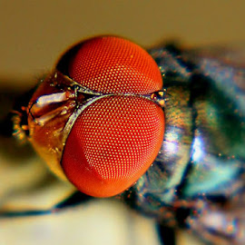 fly by Doel Klimiz - Novices Only Macro