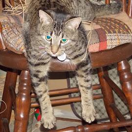Tigger by Michelle Bonin - Animals - Cats Portraits (  )