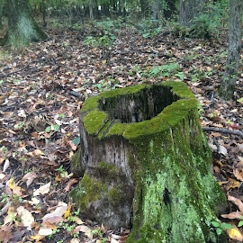 Mossy Stump by Jessica Anderson - Backgrounds Nature