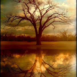 A Place To Refect by Elizabeth Burton - Digital Art Places ( clouds, water, reflection, fall colors, beautiful, landscape, tranquil, sky, tree, nature, mystical, fall, tranquility, branches,  )