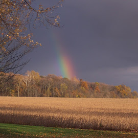 End of Rainbow above the woods. by Nancy Felver - Landscapes Weather