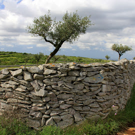 Stone wall by Gil Reis - Nature Up Close Rock & Stone ( walls, paths, nature, stone, places, portugal, rural )