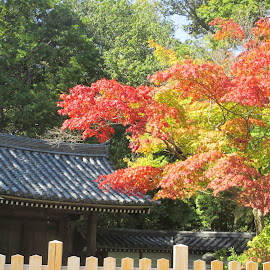 Kyoto Autumn Colors by Tatiana Isoo - Landscapes Travel ( fall, color, colorful, nature )