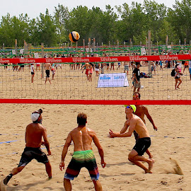 Volleyball by Ronnie Caplan - Sports & Fitness Other Sports ( games, sand, volleyball, players, sports, trees, men, beach, net, competition )