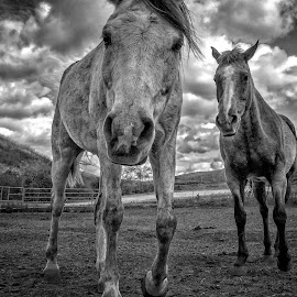 Heaven's Ranch by Apollo Reyes - Animals Horses ( clouds, ranch, horses, horse,  )