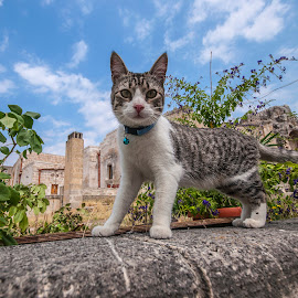 Tender cat by Mauro Amoroso - Animals - Cats Portraits ( cat sweet sassiportrait matera )