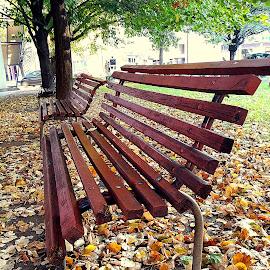 by Biljana Nikolic - City,  Street & Park  City Parks ( public, bench, furniture, object )