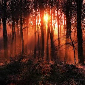 Sunrise in the Woods by Ceri Jones - Landscapes Forests ( woodlands, winter, season, trees, forest, sunrise, woods, rays, sun )
