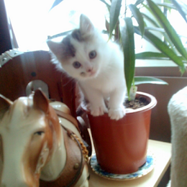 Why cant I dig the plant up! by Lyz Amer - Animals - Cats Kittens ( kitten )