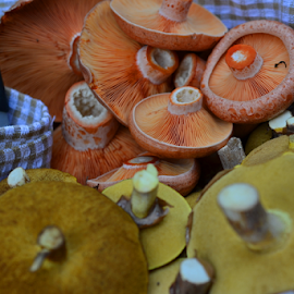 Plenty  by Kamila Romanowska - Food & Drink Ingredients ( mushroom, wild, fungi, food, australia, mushroom  hunting, meal )