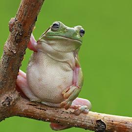 Alone Frog by Thomp Jerry - Animals Amphibians ( macrodaily, macro, animals, macrophotography, amphibians )