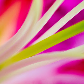 by Sabina Lombardo-Salmina - Nature Up Close Gardens & Produce (  )