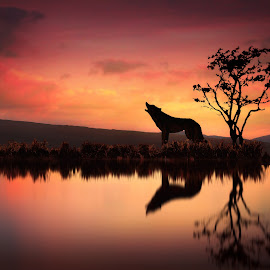 The Wolf At Sunset by Jennifer Woodward - Digital Art Animals ( animals, tree, nature, wolf, sunset, silhouette, wildlife, sunrise )