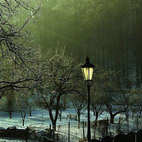 A lamp by Ruda Stančík - Landscapes Travel ( winter, lamp, morning, garden, light )