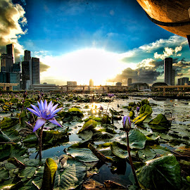 Lotus in Singapore by Erico Claudio - City,  Street & Park  Skylines ( garden by the bay, arts and sciences, lotus, sunset, singapore )