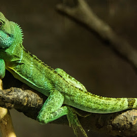 by Sarita Jithin - Animals Reptiles