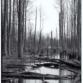 Desolate Woods of NYC by Joe Proctor - Black & White Landscapes ( winter, staten island, black and white, new york city, woods )