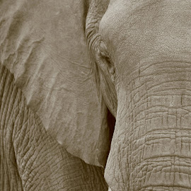 Up Close. by Heather Steyn - Novices Only Wildlife