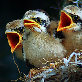 by Abhi Yasa - Animals Birds