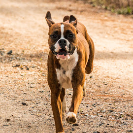 by Kyle West - Animals - Dogs Running