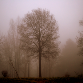 Mist by Alami Alami - Nature Up Close Trees & Bushes ( tree, nature, forest, nikon,  )