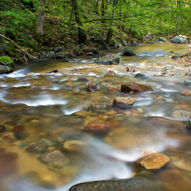 by Siniša Almaši - Nature Up Close Water ( water, up close, stream, tree, nature, stone, rock, forest, landscape, river )