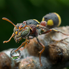Bee Plays Water Bubble by Carrot Lim - Animals Insects & Spiders